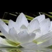 helderwetende Biba- Lieve mensen, ik ben medium Biba en ben zeer intens met het helpen op het gebied van complexe liefdesrelatie,s. We gaan kijken waar je staat, ik werk met jullie geboorte datums en wil zo samen met jou oplossingen en antwoorden vinden. Ook voor allerlei andere vragen kan je bij mij terecht.  Biba Spirituele hulplijn waar een helderwetende  je  spirituele en paranormale inzichten geeft. Helderwetenden geven direkt spiritueel en paranormaal advies.